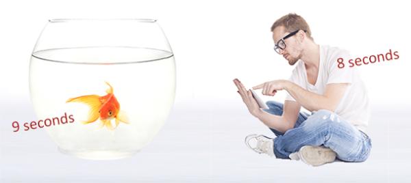 goldfish versus human attention span